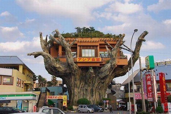 Самые необычные рестораны в мире (45 фото)