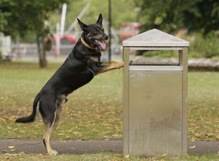 Собака, которая собирает мусор (11 фото)