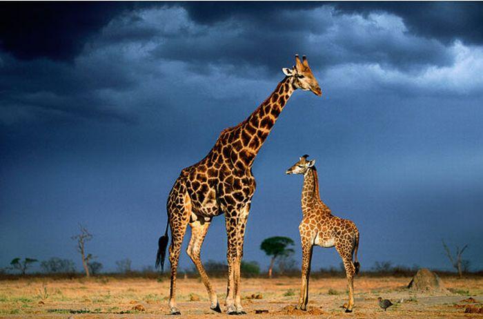 Семьи животных (16 фото)