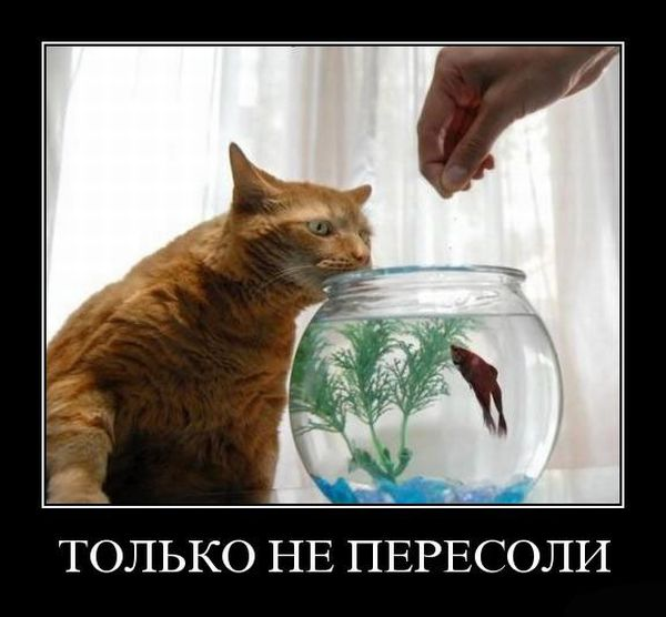 http://ru.trinixy.ru/pics4/20100813/demotivatori_01.jpg
