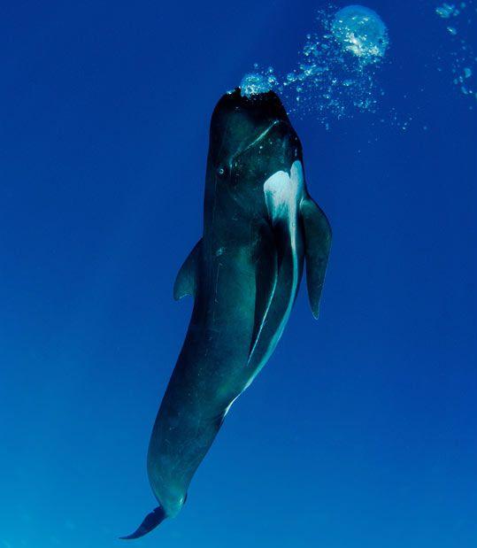 Улыбчивые киты (9 фото)