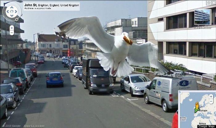 Топ 10 самых крутых фотобомб на Google Street View (10 фото)