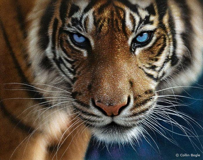 Красивые рисунки дикой природы (20 фото)