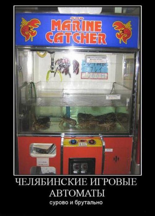 http://ru.trinixy.ru/pics4/20100820/demotivatory_226.jpg