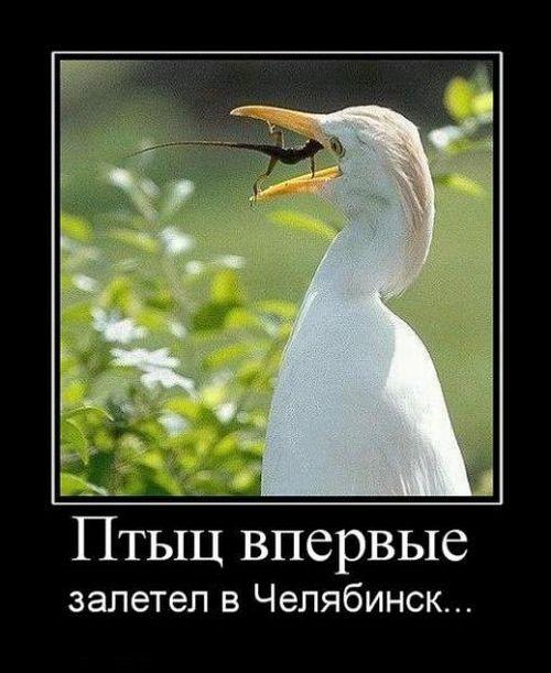 http://ru.trinixy.ru/pics4/20100820/demotivatory_230.jpg