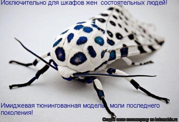 насекомое, белое, черные пятнышки.