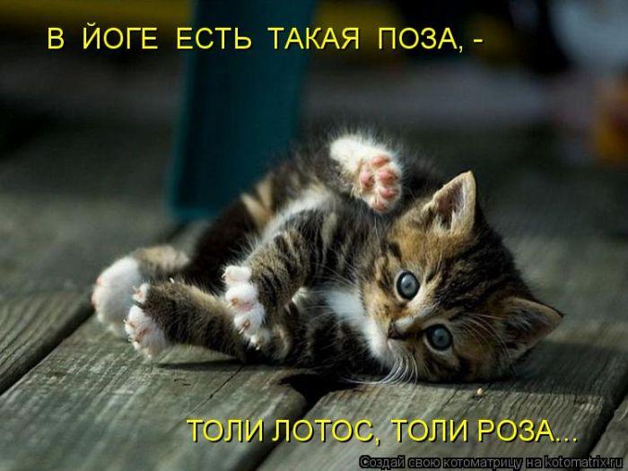 Фото на тему Котята прикол видео.