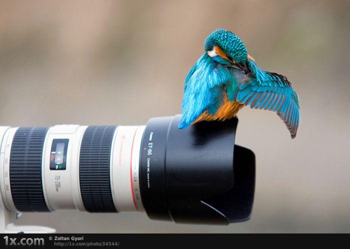 Очень классные фотографии птиц (41 фото)