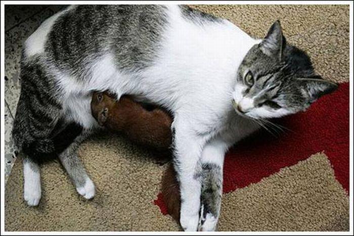 Коты и белка (10 фото)