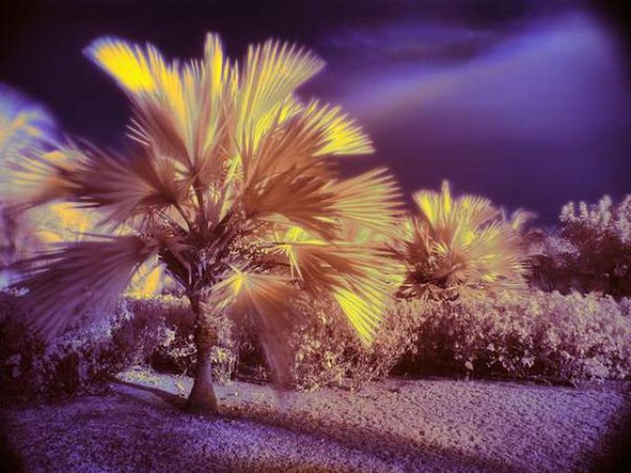 Инфракрасные фотографии. Часть 2 (41 фото)