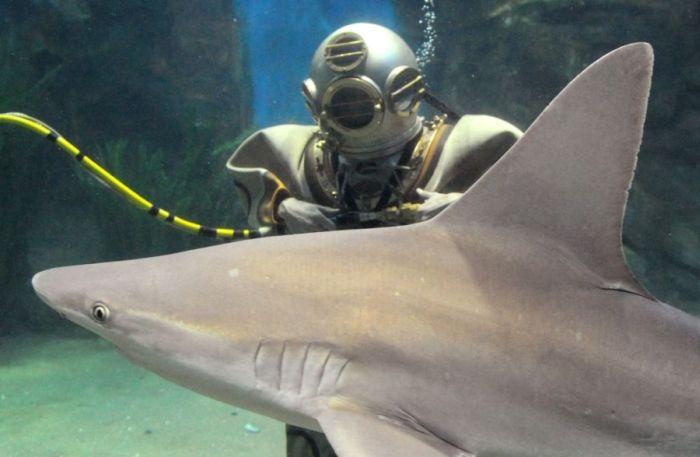 Акулы (27 фото)