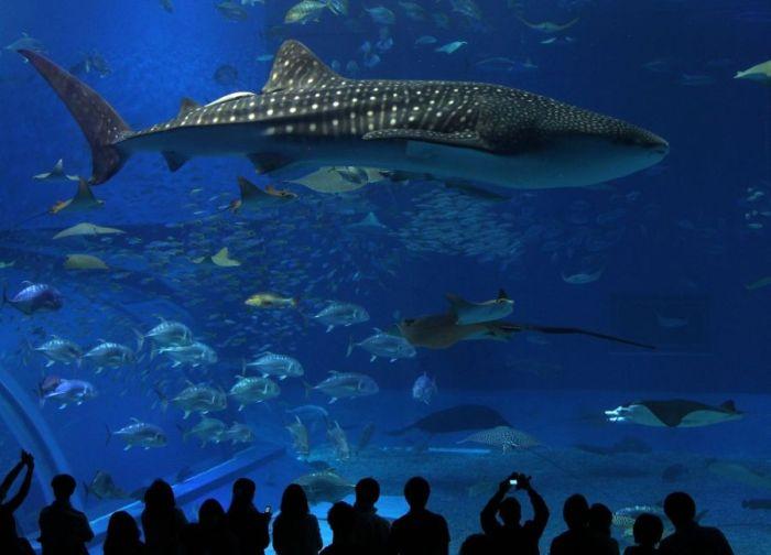 Фото 30, Немного об акулах (31 фотография)