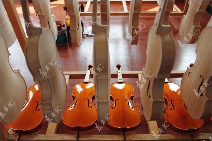 Как делают скрипки (43 фото)