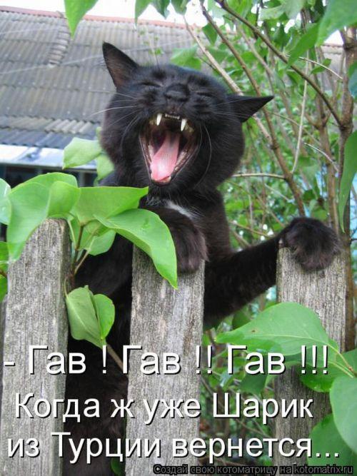 http://de.trinixy.ru/pics4/20100903/kotomatrix_04.jpg