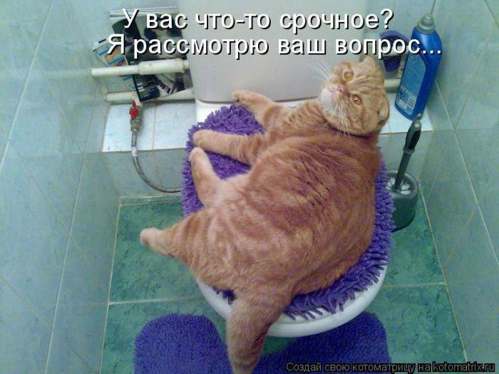 http://de.trinixy.ru/pics4/20100903/kotomatrix_07.jpg