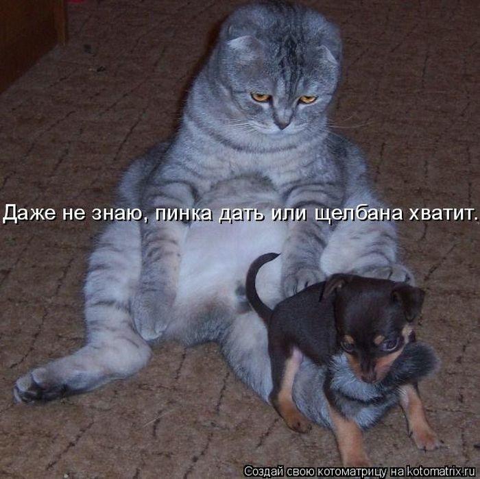 http://de.trinixy.ru/pics4/20100903/kotomatrix_19.jpg