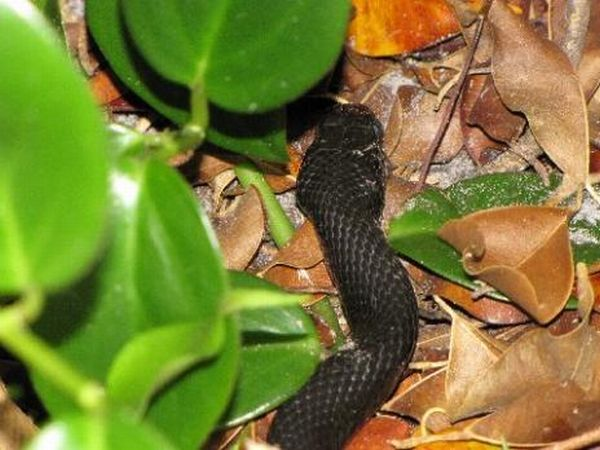 Жаба победила змею (29 фото)