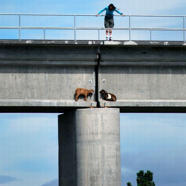 Кто это на мосту? (3 фото)