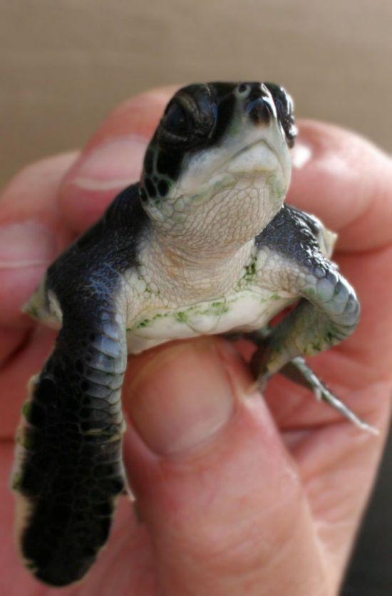 Смайлики в исполнении черепах (10 фото)