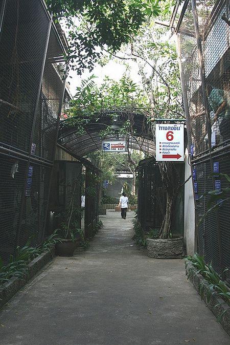 Зоопарк на крыше торгового центра в Бангкоке (31 фото)