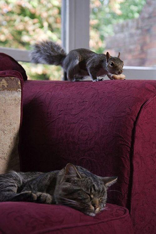 Белка и кот (6 фото)