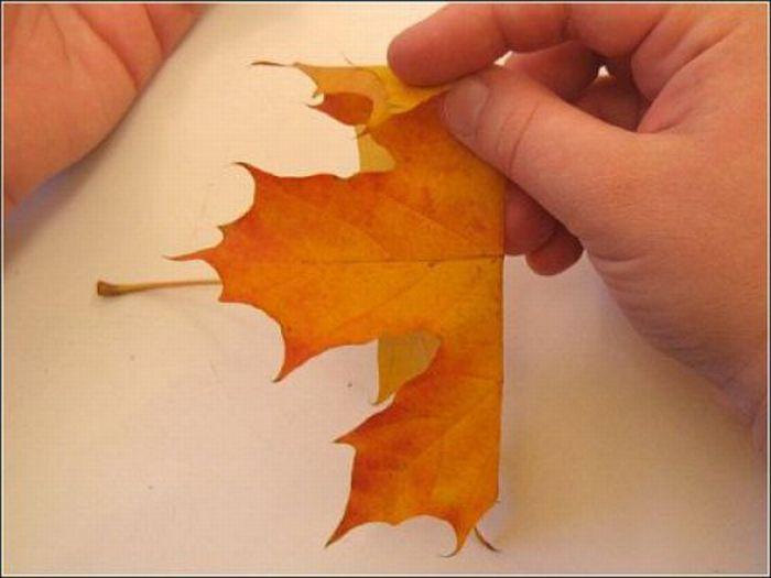 Осенний букет (15 фото)