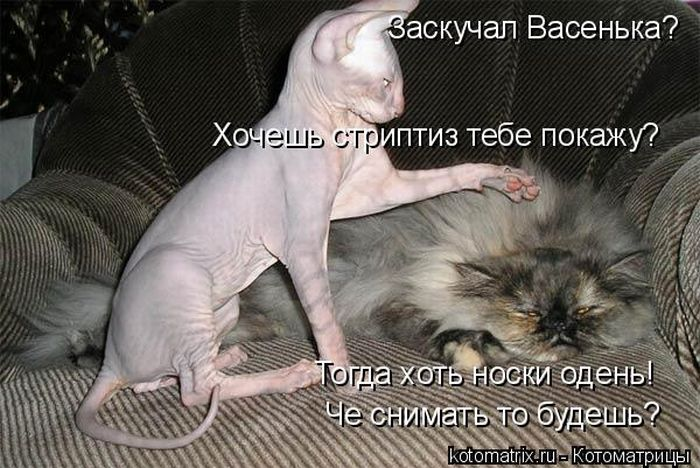 http://trinixy.ru/pics4/20100910/kotomatrix_06.jpg