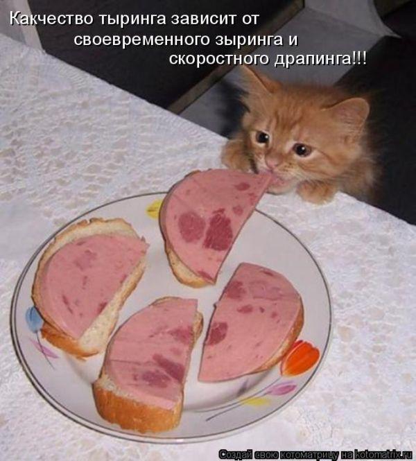 http://trinixy.ru/pics4/20100910/kotomatrix_43.jpg