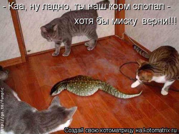 http://trinixy.ru/pics4/20100910/kotomatrix_44.jpg