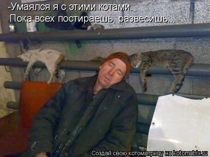 http://trinixy.ru/pics4/20100910/kotomatrix_50.jpg