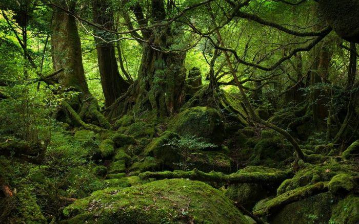 Потрясающие фотографии природы (68 фото)