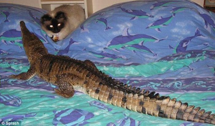Опасное домашнее животное (8 фото)