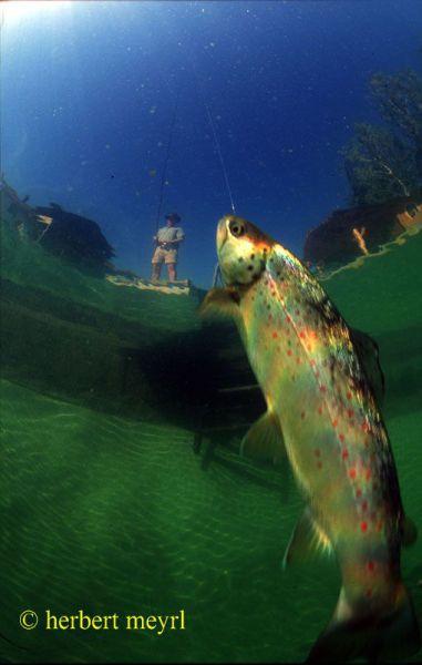 Подводный луг (28 фото + видео)