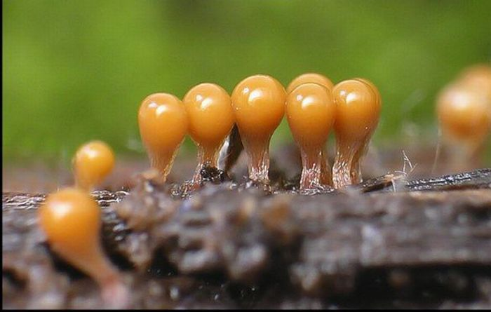 Красивые грибы плесени (63 фото)