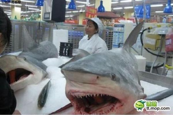Рыбный рынок в Китае (3 фото)