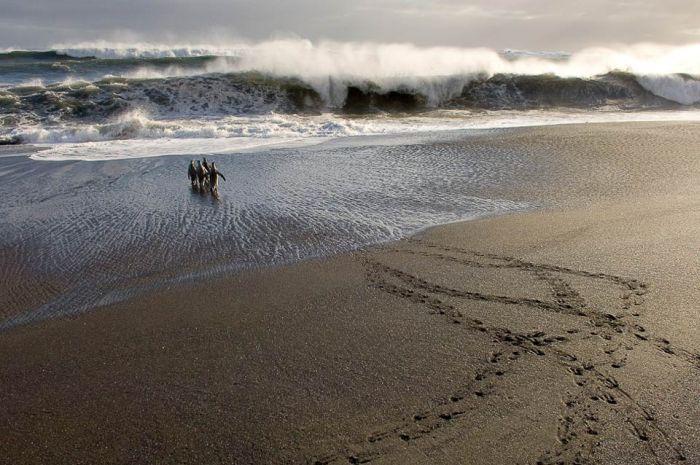 Фотографии дикой природы (25 фото)