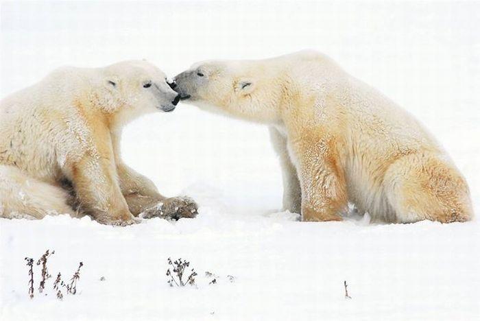 Потрясающие фотографии природы (28 фото)