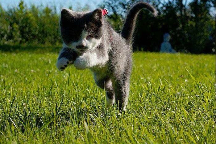 Слепой котенок (13 фото)