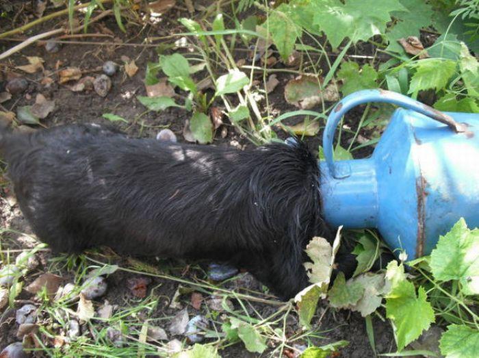 Застрявшая собака (11 фото)