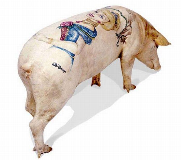Татуировки на свиньях (31 фото)