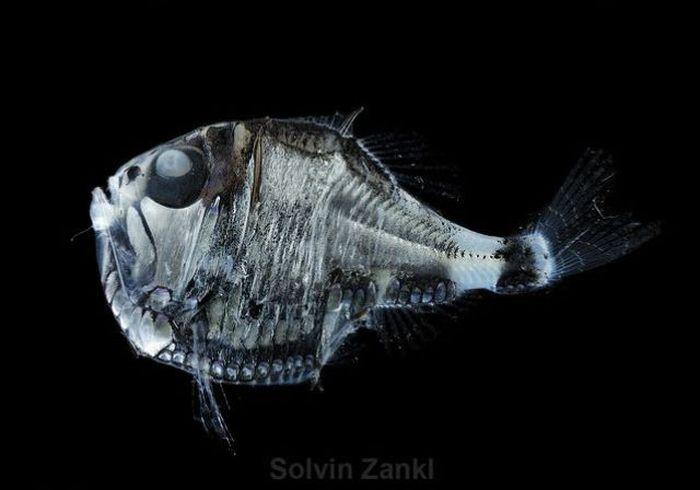Монстры глубин (32 фото)