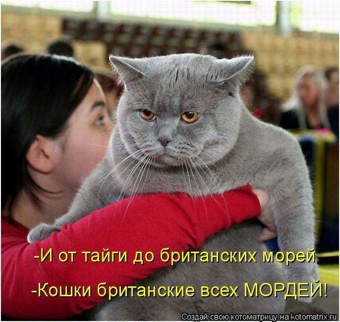 http://de.trinixy.ru/pics4/20100924/kotomatrix_18.jpg