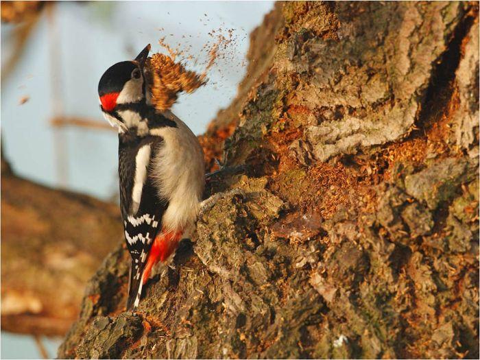 Красивые фотографии дикой природы (45 фото)