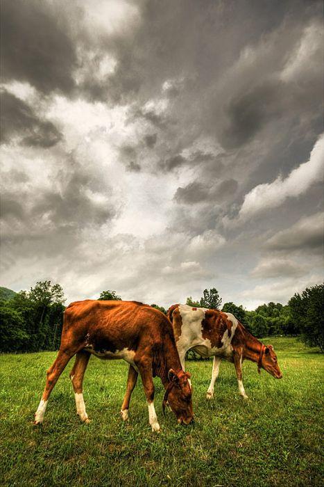 HDR фотографии животных (60 фото)