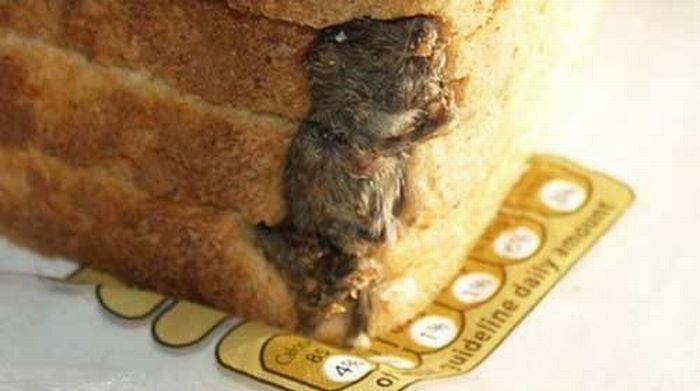 Мышь в хлебе (3 фото)