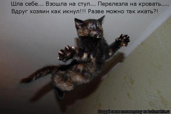 Котоматрица: ну хозяин....я тебе припомню эту КОТЭПУЛЬТУ! ну хозяин....я тебе припомню эту КОТЭПУЛЬТУ!