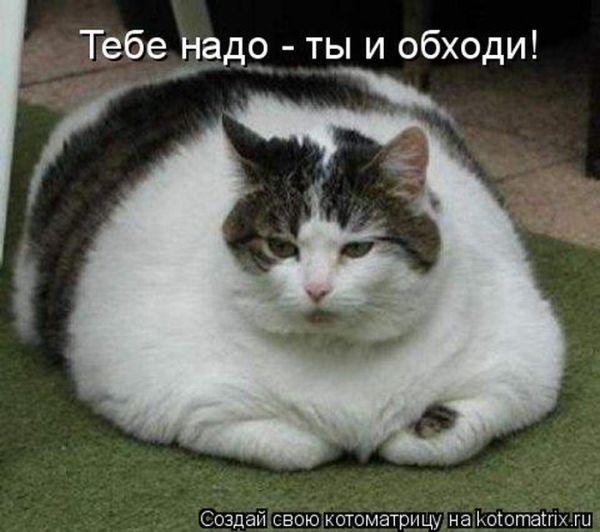 http://de.trinixy.ru/pics4/20101001/kotomatrix_29.jpg