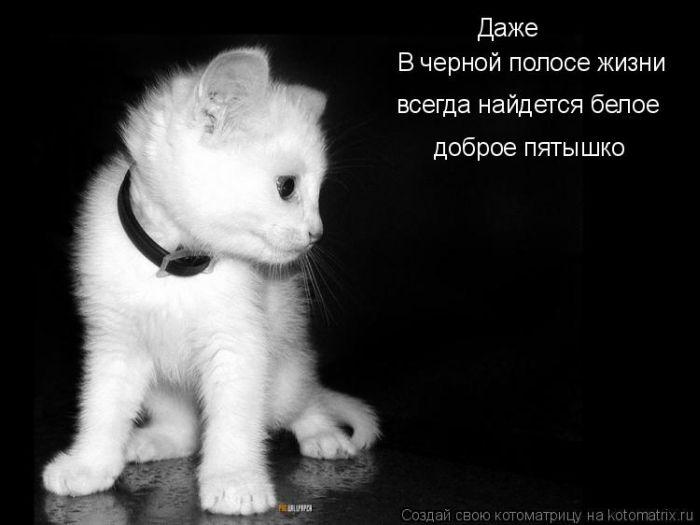 котоматрица лучшее. смешные фото кошек +с надписями.  Запись понравилась.