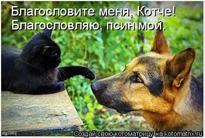 http://de.trinixy.ru/pics4/20101001/kotomatrix_43.jpg