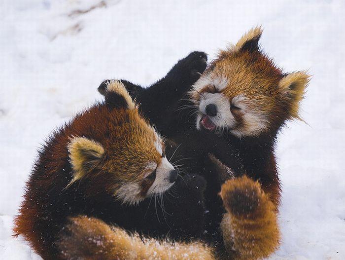 Бои животных (18 фото)